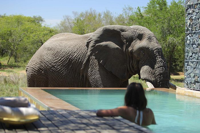 phinda forest safari lodge south africa
