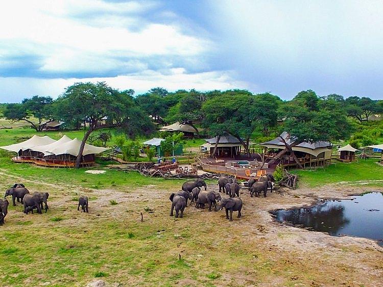 somalisa acacia hwange african bush camps zimbabwe africa