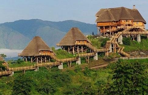 Mahogany springs bwindi impenetrable forest uganda africa