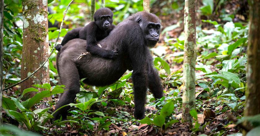primates and predators -
