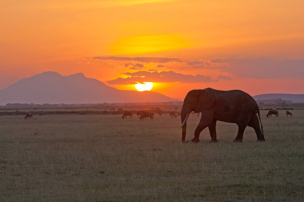 sunset with elephant in foreground on safari in africa