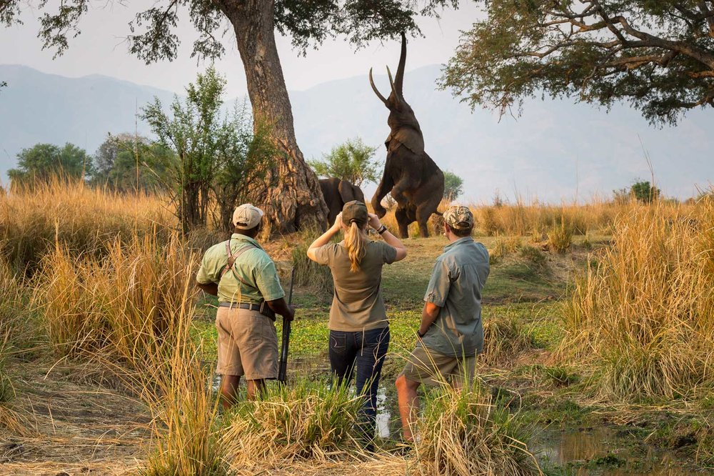 African Safari Experts Walking with Wild Dogs Africa