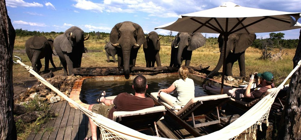 african safari experts elephants at the swimming pool somalisa camp hwange zimbabwe africa