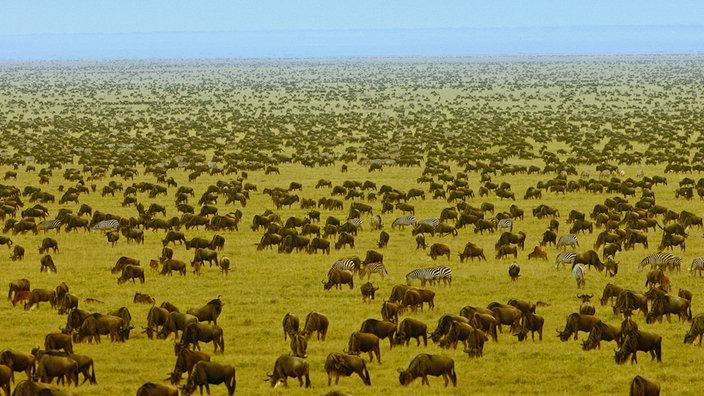 african-safari-experts-great-wildebeest-migration