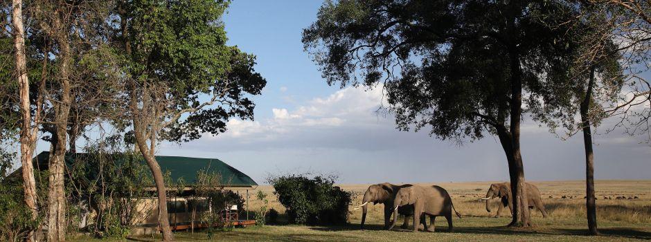 african-safari-experts-governors-camp