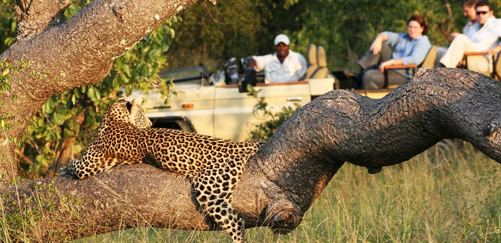 african-safari-experts-game-drive-leopard