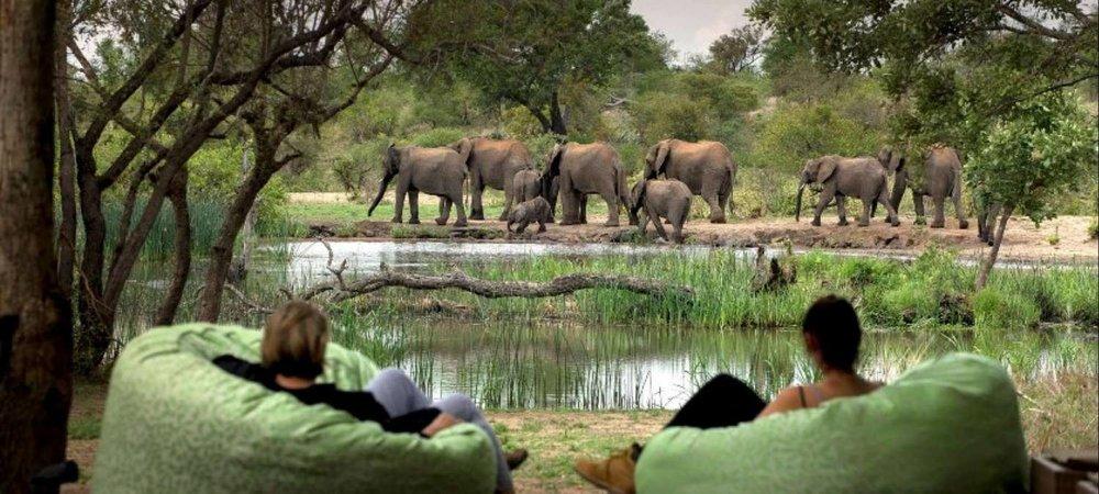 african safari experts timbavati elephants next to a river