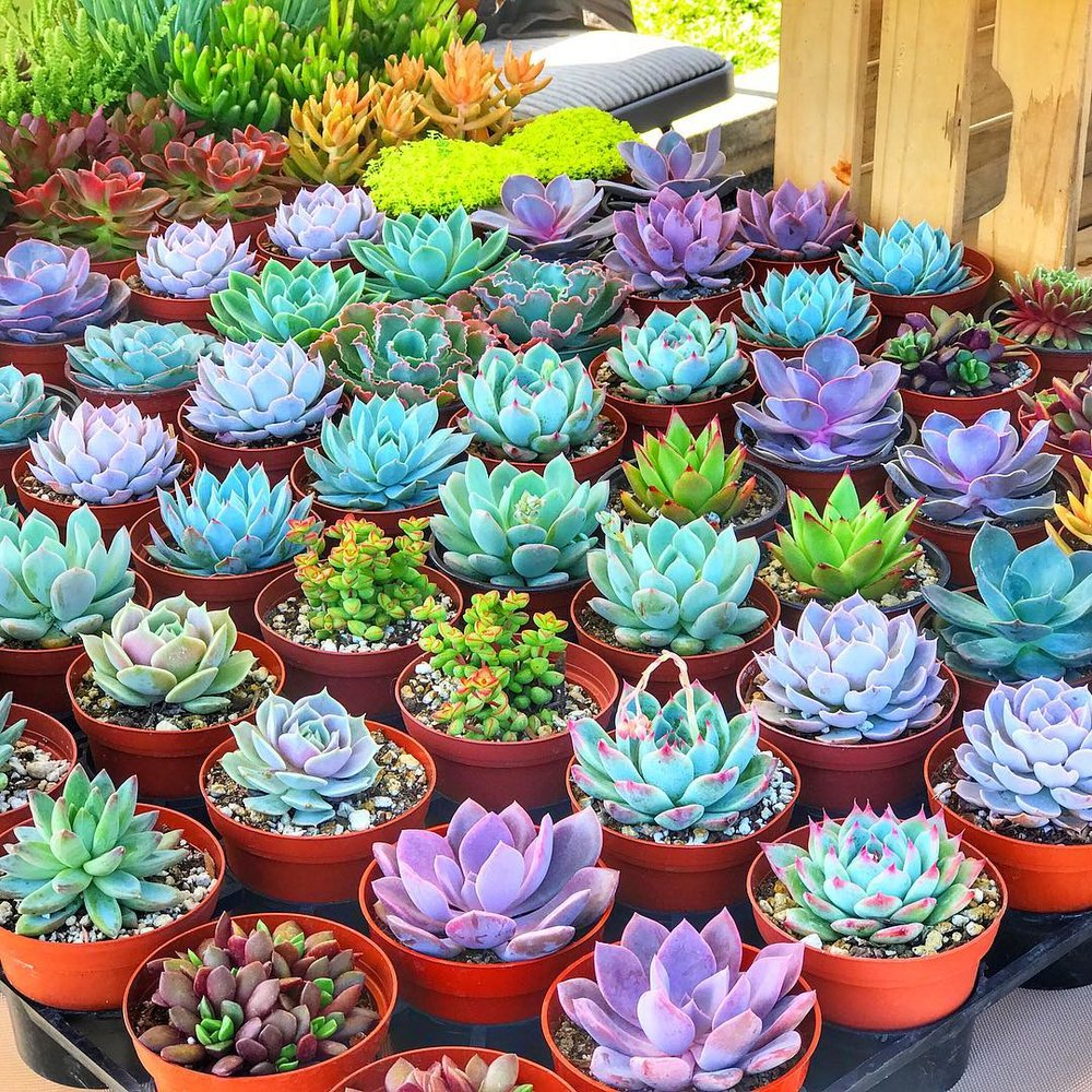 Succulents by Ecoyardscapes
