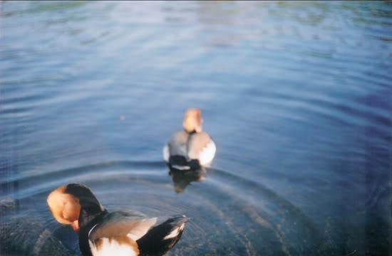 Black Pond, 2008