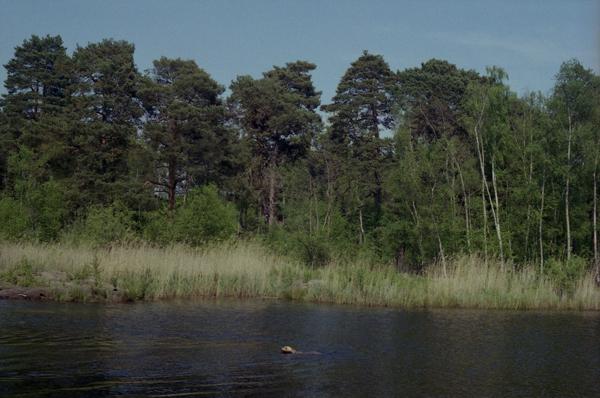 Black Pond, 2012