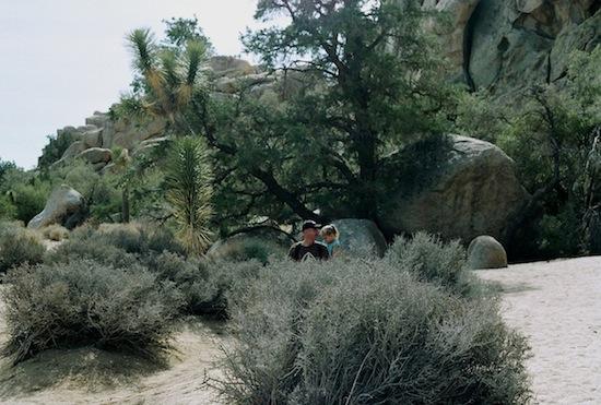 Joshua Tree,2013