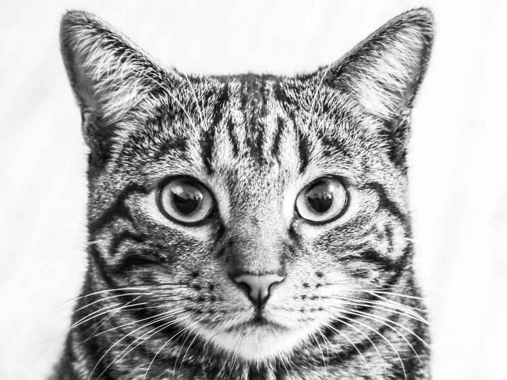 Pets - Capturing 'those' looks.