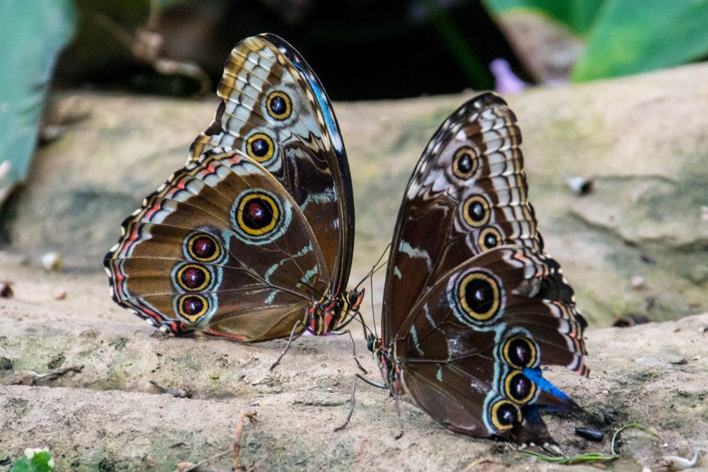 Susannah_Sheppard_Photographer_Butterfly_Blog