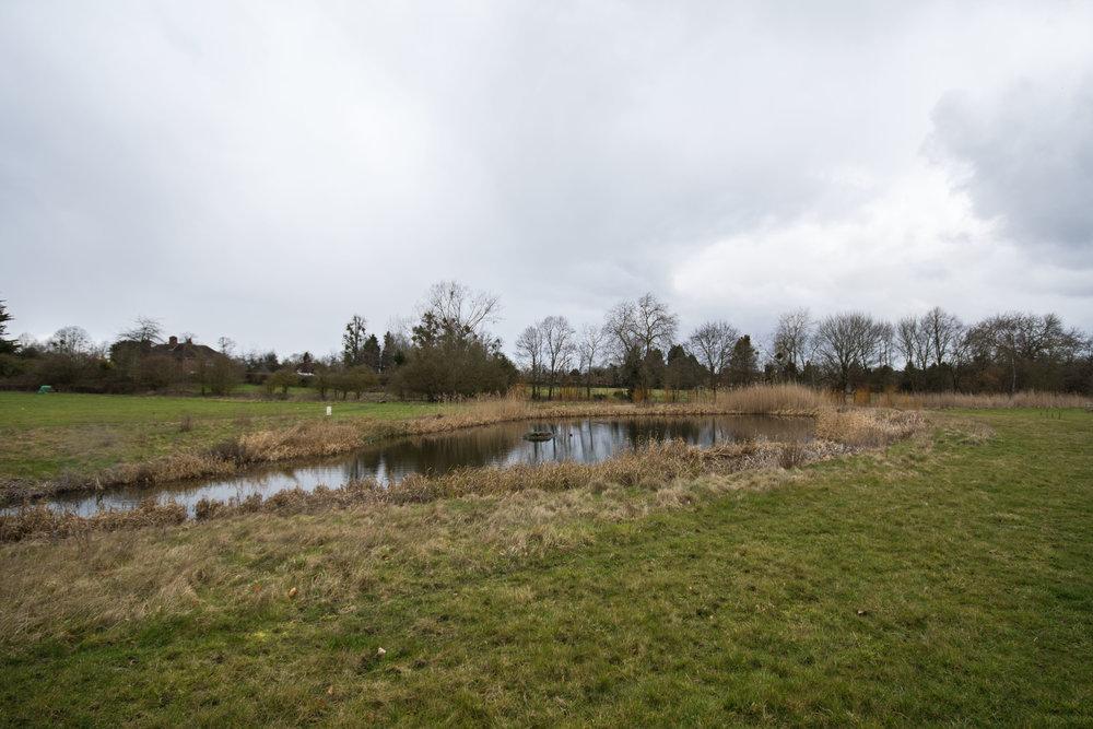 ClandonWood_winter_pond_Susannah_Sheppard_blog