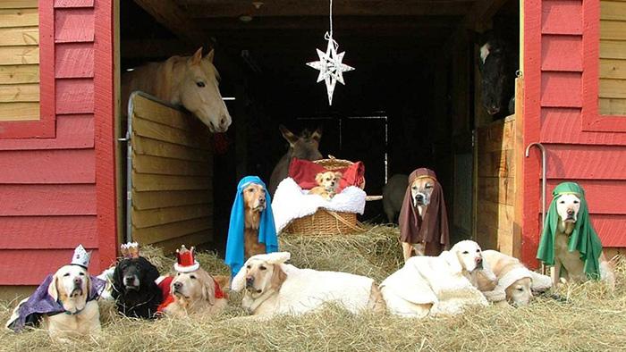 animal-nativity-34