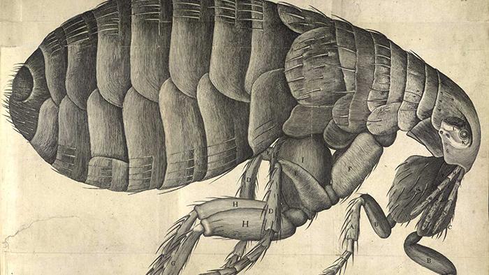 cells-micrographia