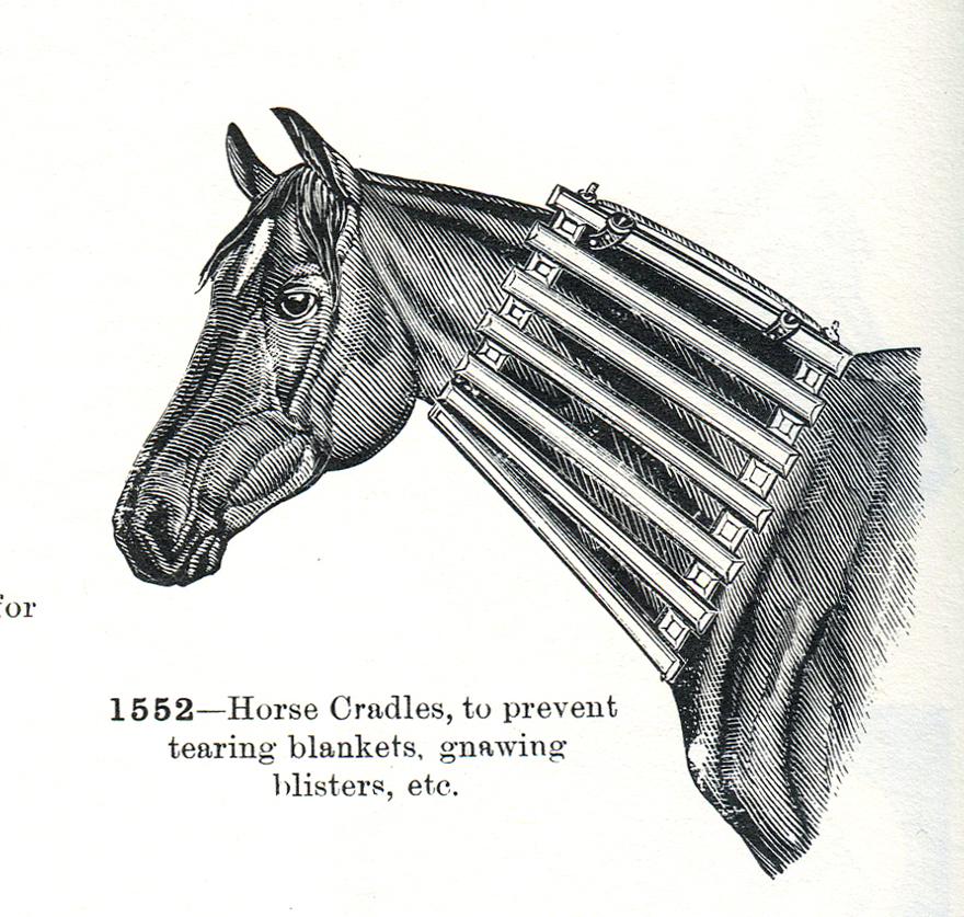 Horse20.jpg
