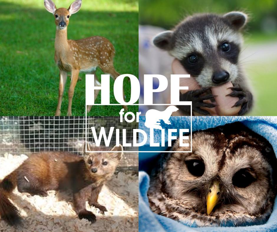 HopeforWildlife