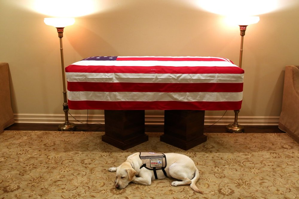 The 94-year-old dog lover and his new service dog — a yellow Labrador retriever named Sully  Sully had been trained by America's VetDogs, a nonprofit that provides service dogs.
