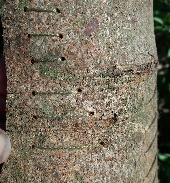 stitching into bark.jpg