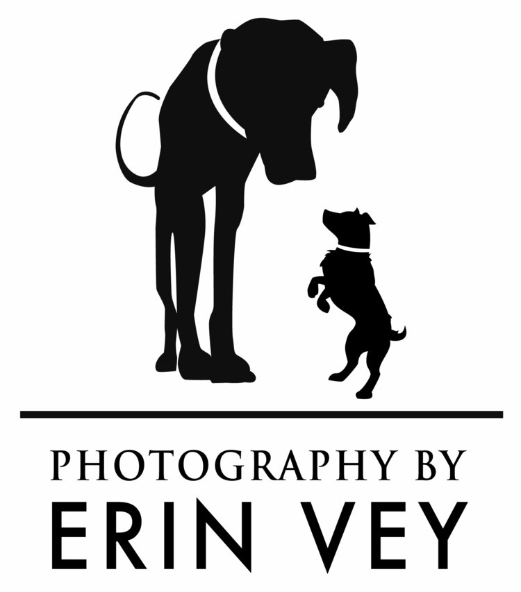 Lifestyle Dog Photographer