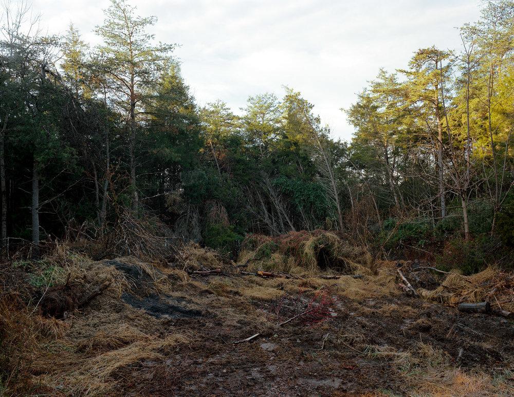 Bulldozed trees, Ashburn, Virginia, 2011