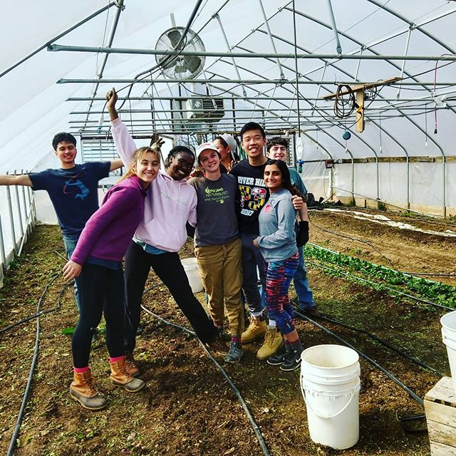 Huge (belated) thank you to UMD alternative spring breakers and the Chesapeake Bay Foundation.  Thanks to them all of my winter veg is now cleared out to make room for spring! (And four poorly situated baby bunnies have been re-homed off farm) #notinmyhightunnel #manyhandsmakelightwork #springbreak #springcleaning