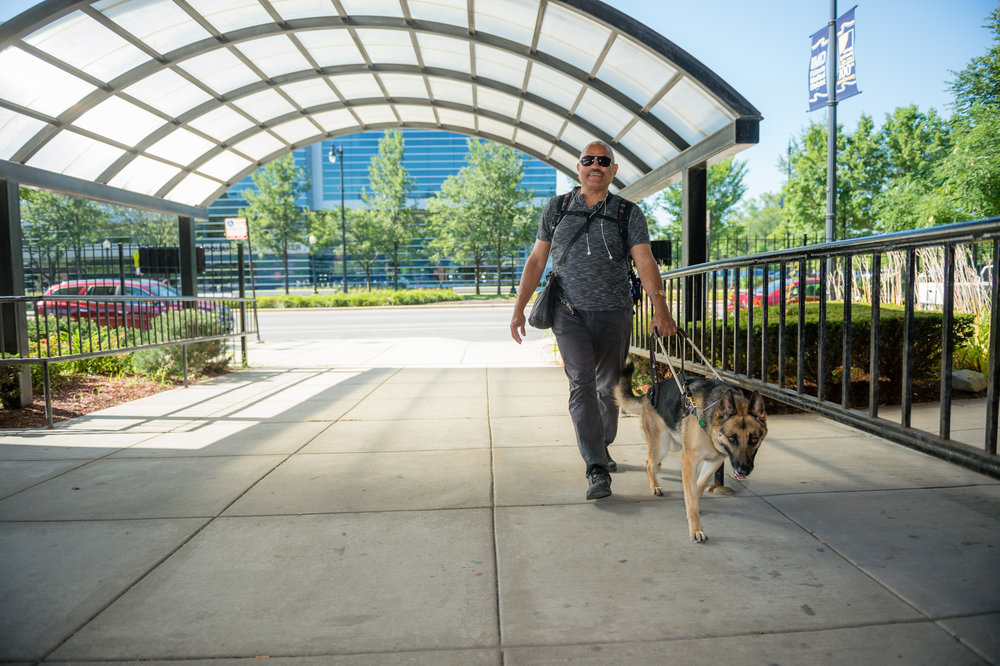 Many employees of The Chicago Lighthouse use guide dogs to travel safely and independently.