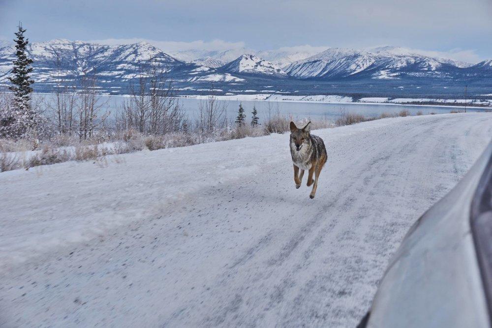 Date: 2017 Location: Alaska