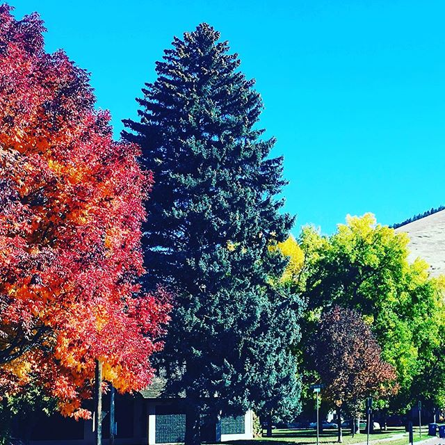 Loving those #fallcolors #nature #selfcare #musclememorymissoula