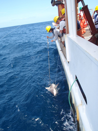 lisa Natanson sand bar shark.jpg