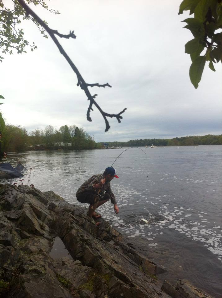 shad fishing 2014.jpg