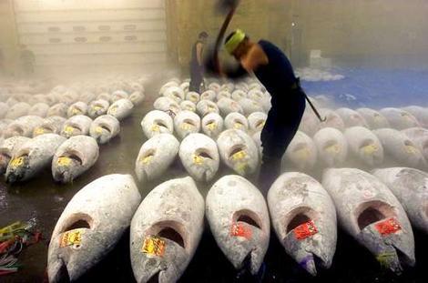 tuna auction.jpg