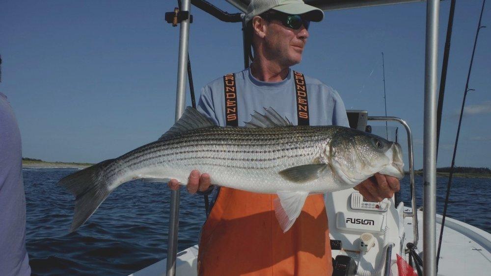 Maine coast guide service -