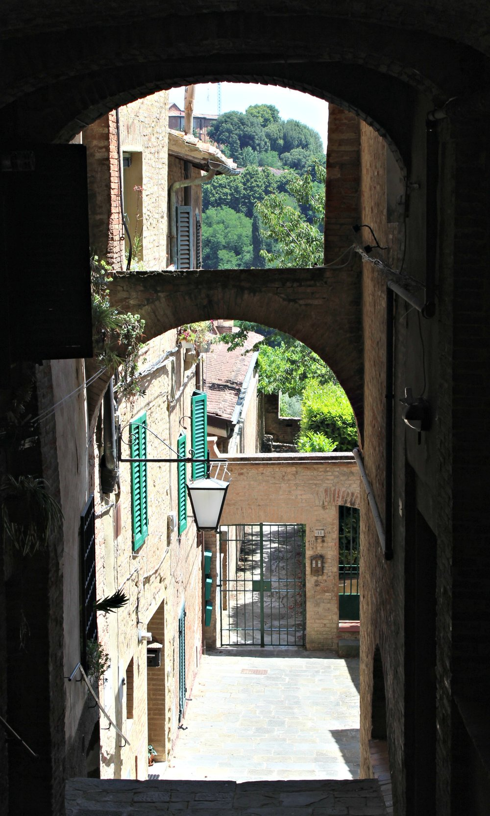 views through alley to trees.jpg
