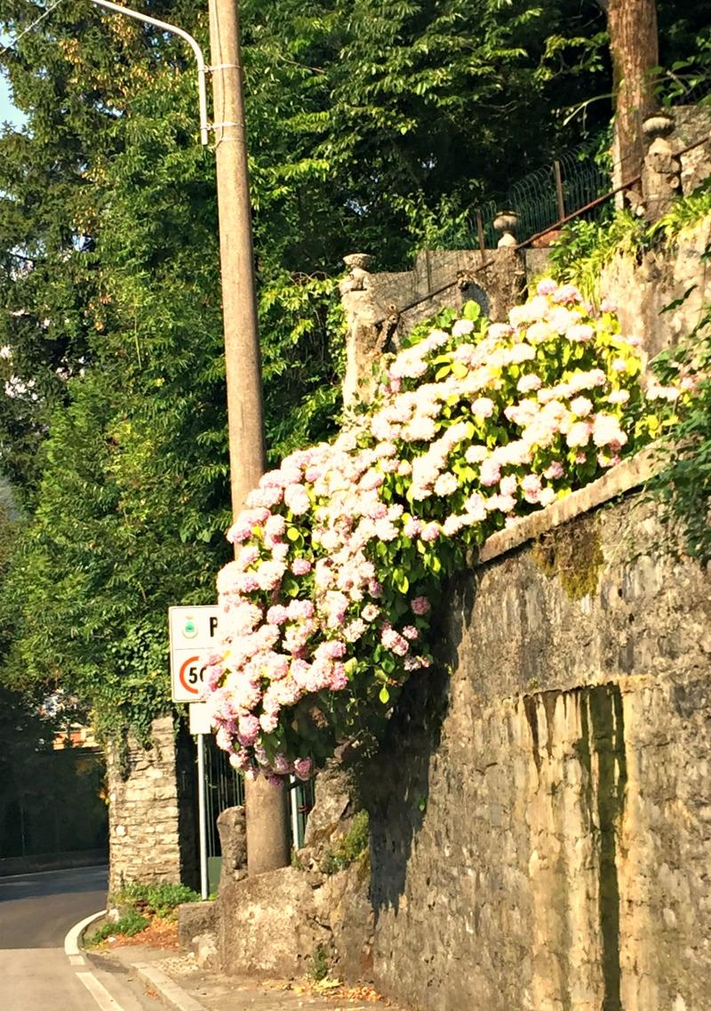 flowers lake como.jpg