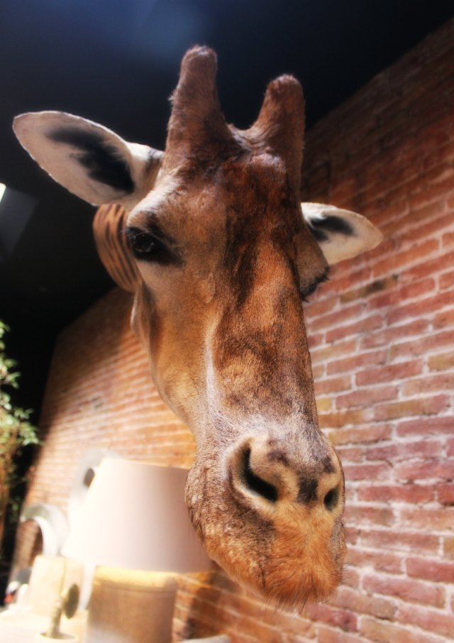 Hello gorgeous and the giraffe at Azul Tierra Barcelona