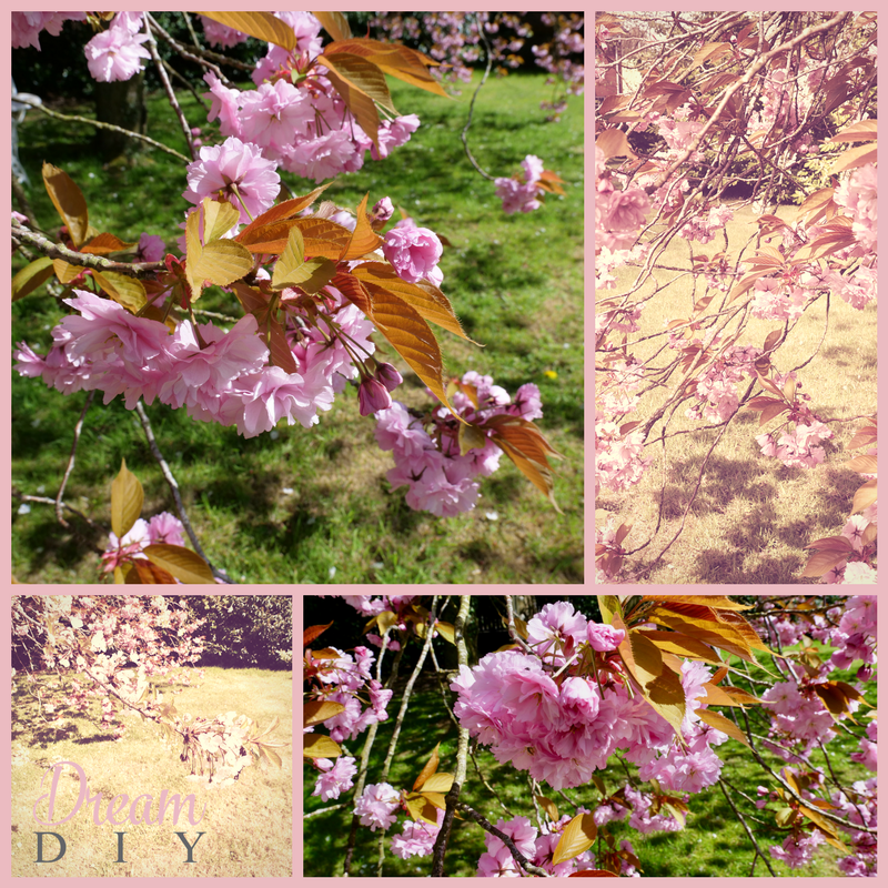 cherry tree1.png