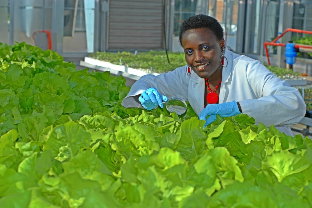 Esther Ngumbi at Auburn University Plant Science Research Center Greenhouses (picture taken by Dr. Ramohhan Balusu).