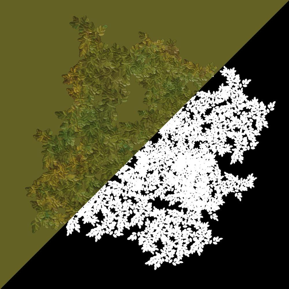 tree_leaves.jpg