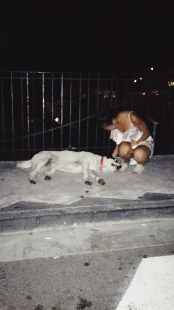 Positano's local. He wanders all over Positano. Found him here at 3AM.