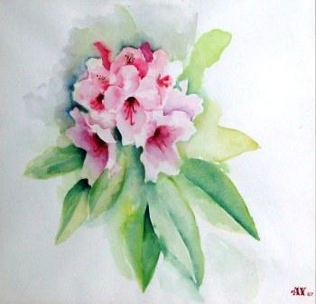 AvrilYoungPinkRhododendron1987.jpg