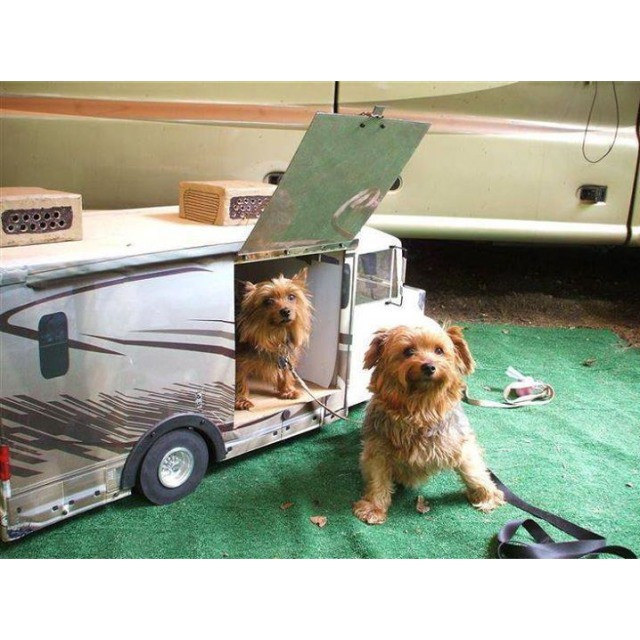 rving-with-pet.jpg