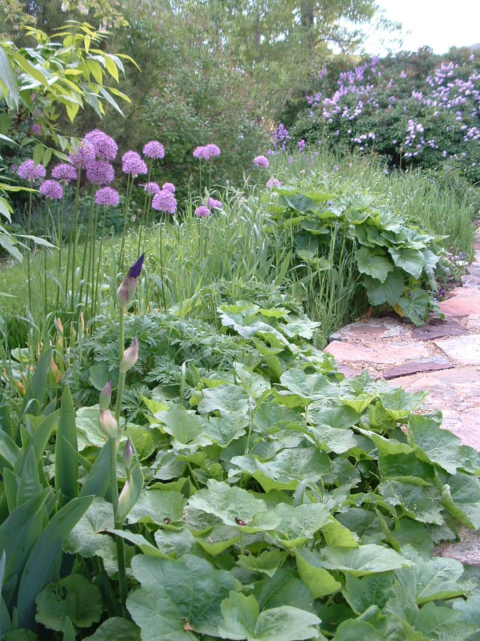 Flower Garden.jpg