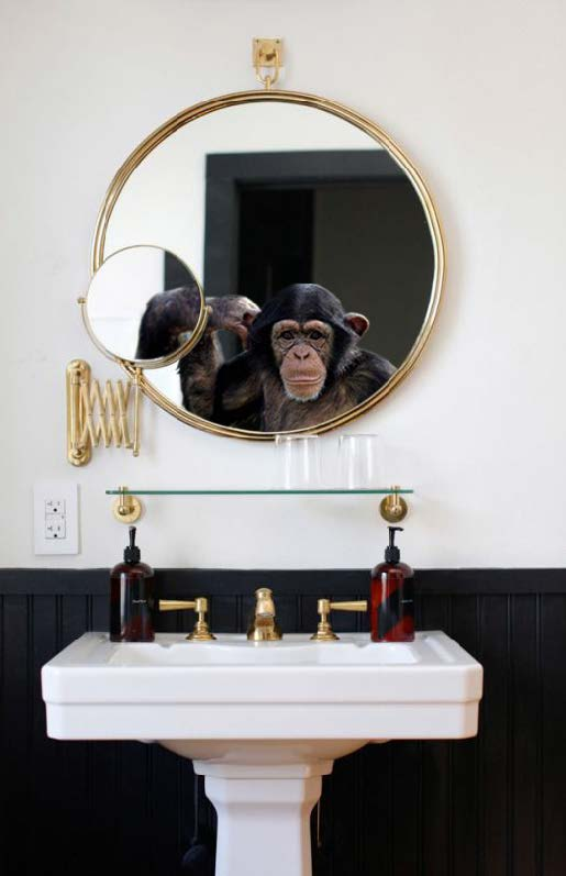 Monkeys in Mirrors