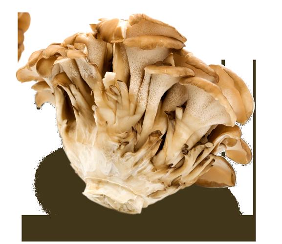 maitake-mushroom-01.png