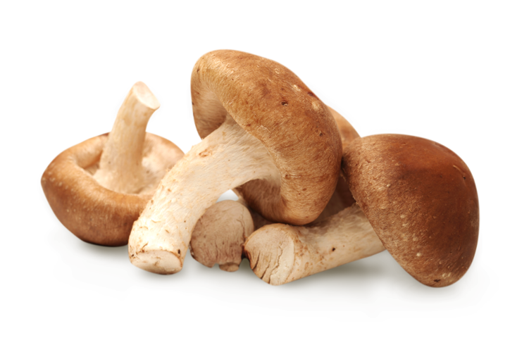 shiitake-mushroom-01.png