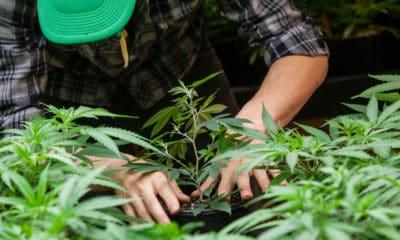 california-weed-farmers-challenging-state-grow-regulations-hero-400x240-1.jpg
