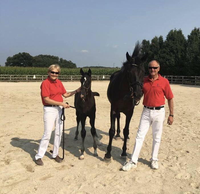 "Congratulations!!! Helmut and Margret Schrant Meadow Brook Farm, IL - 2017 born colt, ""CJ"" by Coronado out of Cest Noir. CJ was Premium Foal at Inspection, August 2018"