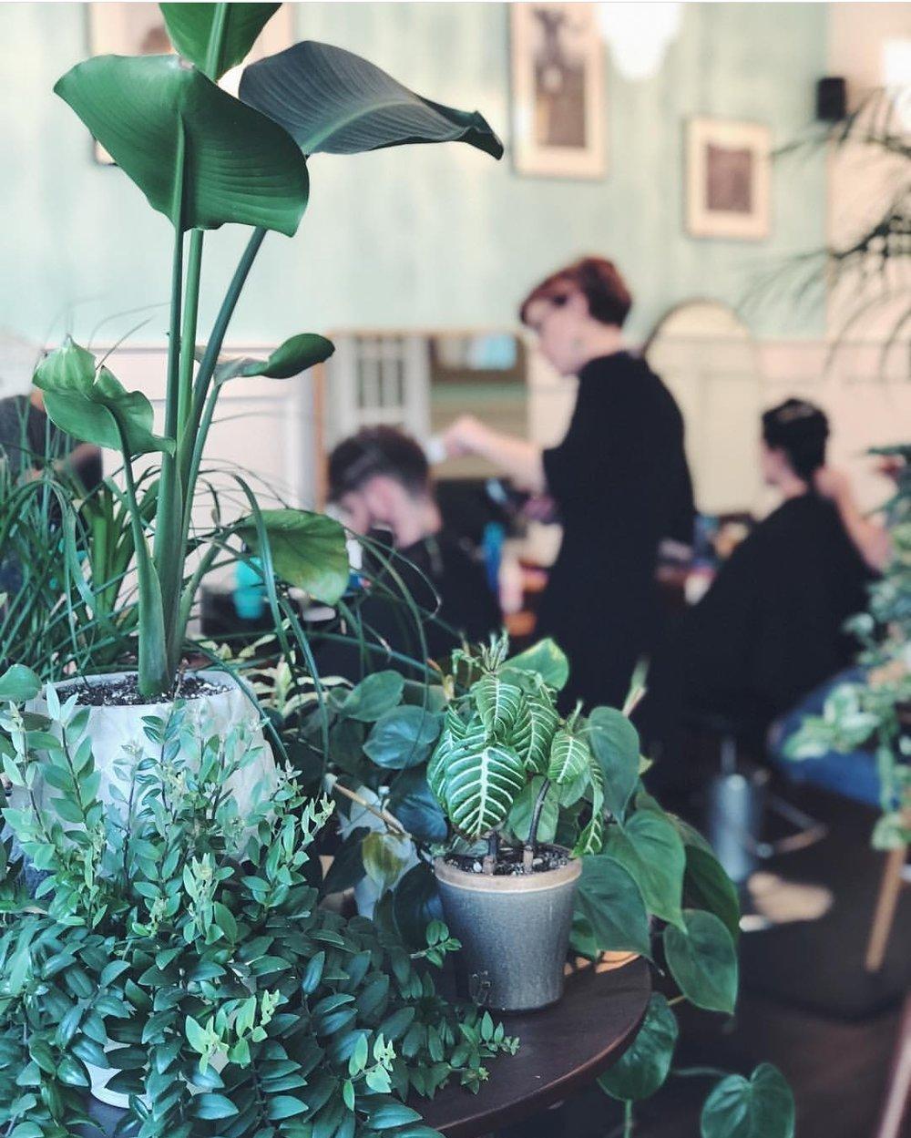 Plants on a table in a hair salon.
